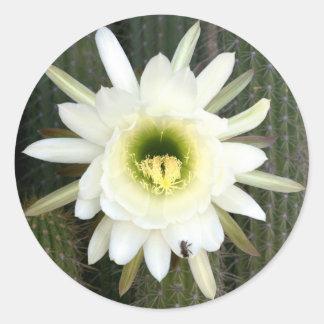 Reina de la flor del cactus de la noche, región etiquetas redondas