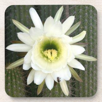 Reina de la flor del cactus de la noche, región posavasos