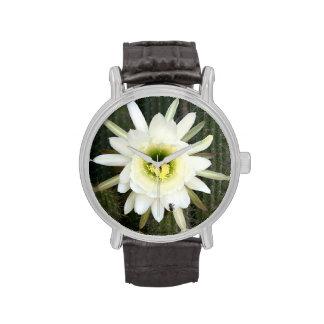 Reina de la flor del cactus de la noche, región relojes