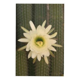 Reina de la flor del cactus de la noche, región impresiones en madera