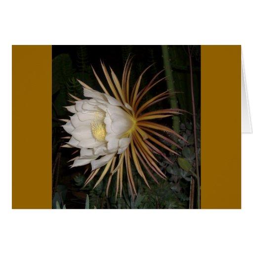 Reina de la flor del cactus de la noche tarjeta de felicitación