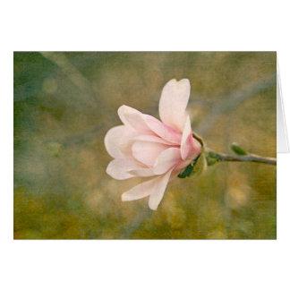 Reina de la magnolia