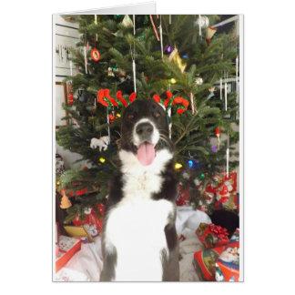 Reindeer Antlers Dog Christmas Card