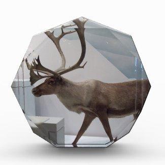 Reindeer; caribou awards