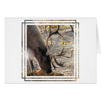 Reindeer/Caribou Card