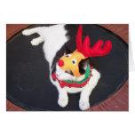 Reindeer Cat Cards