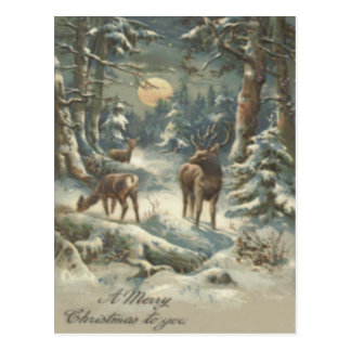 Reindeer Christmas Tree Evergreen Forest Snow Postcard