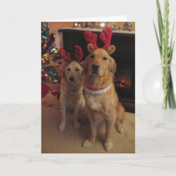 Reindeer Golden Retriever card