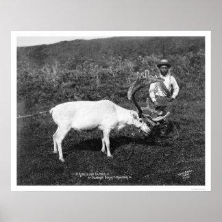 Reindeer Eskimo Alaska 1920 Print