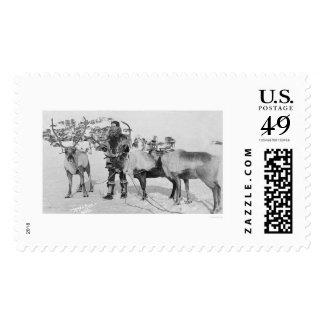 Reindeer Herd Alaska 1909 Postage Stamps