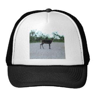 reindeer IN KOTZ AK Trucker Hat