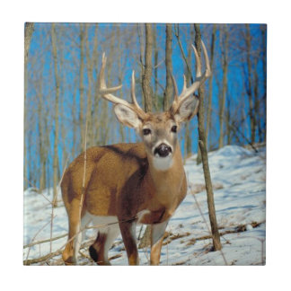 Reindeer In The Forest In The Snow Photo Ceramic Tile