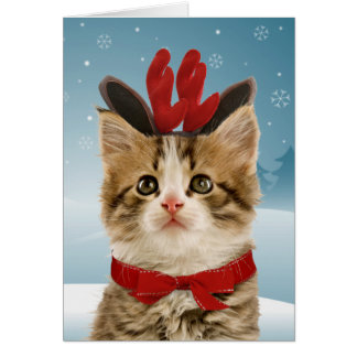 Reindeer Kitten Christmas Card