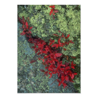 Reindeer lichen and blueberry leaves, Quebec, Cana Invite