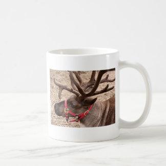 Reindeer near Anchorage, Alaska, USA Coffee Mugs