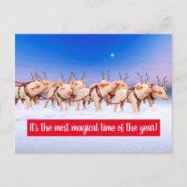 Reindeer Pigs Invitation Postcard