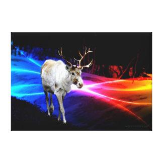 Reindeer (Rangifer tarandus) Canvas Print