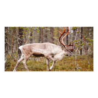 Reindeer walking in forest card