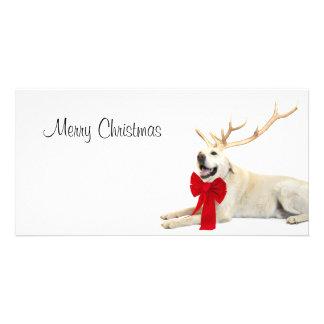 Reindeer yellow lab card