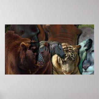 Reino animal posters