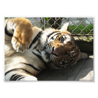 Reino del tigre arte fotográfico