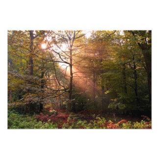 Reino Unido. Bosque del decano. Rayo de sol que pe Fotografía