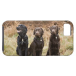 Reino Unido, Inglaterra, Suffolk, bosque de iPhone 5 Case-Mate Protectores