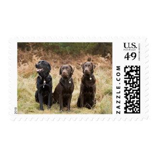 Reino Unido, Inglaterra, Suffolk, bosque de Sellos Postales