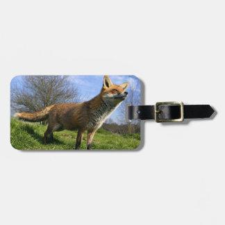 Reino Unido, Inglaterra. Vulpes del Vulpes del Fox Etiquetas Para Equipaje