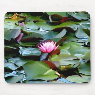 Reinstein Woods - Lily Pond Mouse Pad