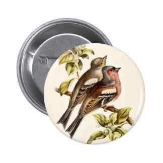 Relative Wild Birds Swaysland Chaffinches Button