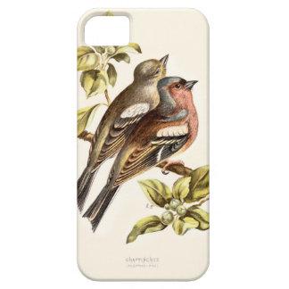 Relative Wild Birds Swaysland Chaffinches iPhone SE/5/5s Case