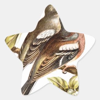Relative Wild Birds Swaysland Chaffinches Star Sticker