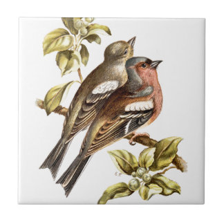 Relative Wild Birds Swaysland Chaffinches Small Square Tile