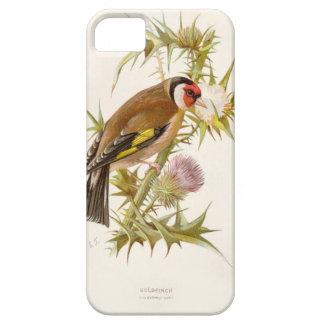 Relative Wild Birds Swaysland Goldfinch iPhone SE/5/5s Case
