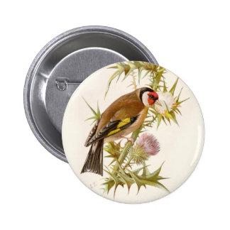 Relative Wild Birds Swaysland Goldfinch Pinback Button