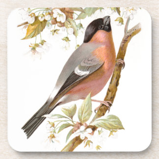 Relative Wild Birds Swaysland Great Bullfinch Coaster