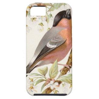 Relative Wild Birds Swaysland Great Bullfinch iPhone SE/5/5s Case