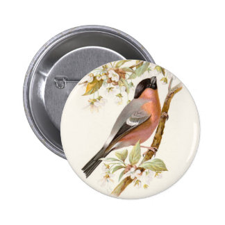 Relative Wild Birds Swaysland Great Bullfinch Pinback Button