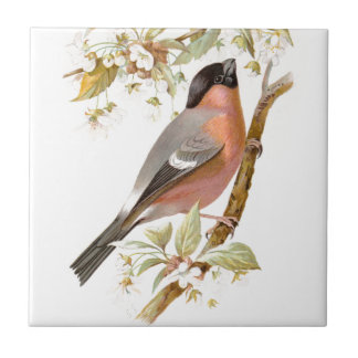 Relative Wild Birds Swaysland Great Bullfinch Small Square Tile