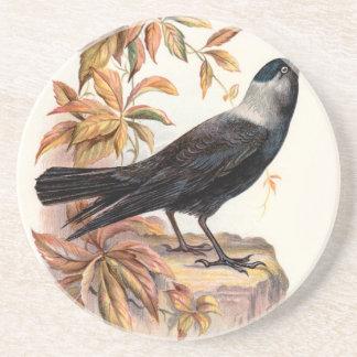 Relative Wild Birds Swaysland Jackdaw Coaster