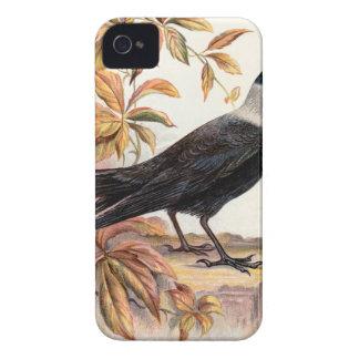 Relative Wild Birds Swaysland Jackdaw iPhone 4 Cases