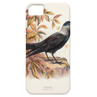 Relative Wild Birds Swaysland Jackdaw iPhone SE/5/5s Case