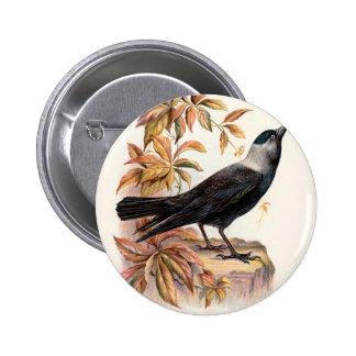 Relative Wild Birds Swaysland Jackdaw Pinback Button