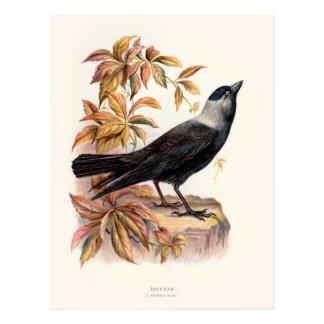 Relative Wild Birds Swaysland Jackdaw Postcard