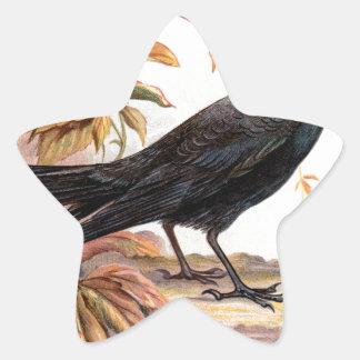 Relative Wild Birds Swaysland Jackdaw Star Sticker
