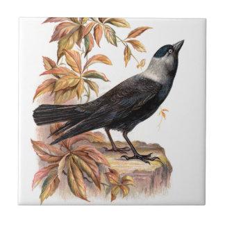 Relative Wild Birds Swaysland Jackdaw Small Square Tile