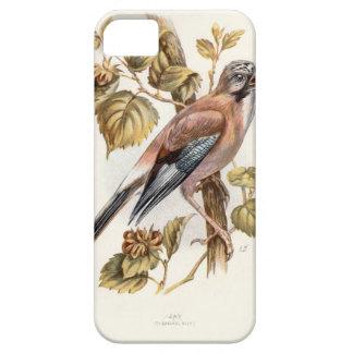 Relative Wild Birds Swaysland Jay iPhone SE/5/5s Case
