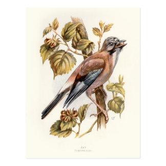 Relative Wild Birds Swaysland Jay Postcard