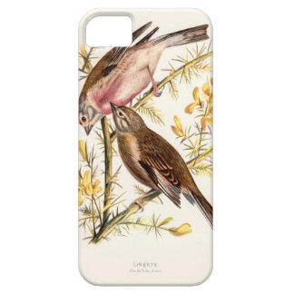 Relative Wild Birds Swaysland Linnets iPhone SE/5/5s Case